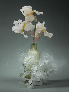 Incredible Photos Of Shattering Flower Vases Captured At The Moment Of Impact