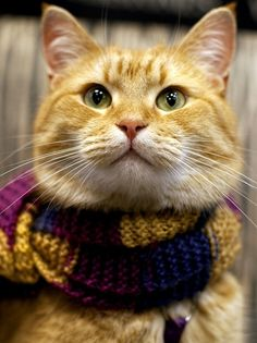 Bob The Cat wearing a scarfhttp://www.heart.co.uk/photos/cute/james-bowen-and-bob-the-cat/