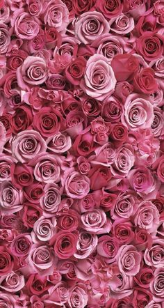 New Ideas Flowers Vintage Background Iphone Wallpaper Pink Roses Flower Wallpaper, Iphone Wallpaper, Rose Pink Wallpaper, Wallpapers Android, Wallpaper Backgrounds, Beautiful Roses, Beautiful Flowers, Beautiful Wall, Pink Roses