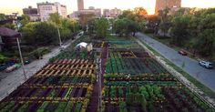 """This article is shared with permission from our friends at The Food Revolution Network. Could fresh, healthy, affordable food be the future of urban neighborhood development? In Detroit, Michigan, """"the first sustainable urban agrihood"""" in the U.S. centers around an edible garden, with easily accessible, affordable produce offered to neighborhood residents and the community. Each... View Article"""