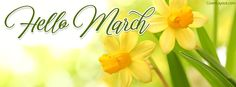 Hello March Fresh Fulips Facebook Cover coverlayout.com