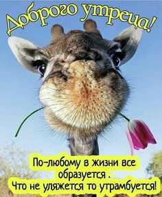 Happy Morning, Good Morning Greetings, Mind Blowing Facts, Thanks Card, Happy Birthday Wishes, Birthday Cards, Wisdom Quotes, Animals And Pets, Giraffe