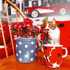 Marimekko, Beautiful Things, Coffee, Animals, Kaffee, Animales, Animaux, Cup Of Coffee, Animal