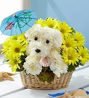 This is sooo cute!!!  Flower arrangement shaped into a puppy!