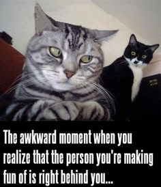 More than two dozen funny cat memes: Pictures of cats in awkward or hilarious poses and captions provided by humans.