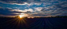 Sunset at the Snowshill Lavender Farm, England Farm Barn, Sunrise, Lavender, England, Celestial, Explore, Barns, Outdoor, Country Barns