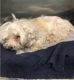 Super Urgent Dogs  These animals are either high risk, injured or have previously appeared on the To Be Destroyed list and survived. They are in danger of being on the list again or destroyed without any further notice./kermit-14231/
