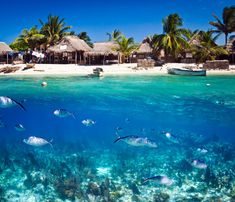 A front view photo of Chachauate, Honduras, spliced together with an underwater photo of the sea life that lives just off the coast.