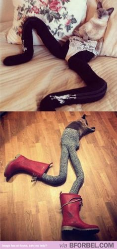 Cats Wearing Leggings Is Now A Thing…