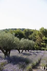 Risultati immagini per modern landscaping with crushed granite olive trees lavender