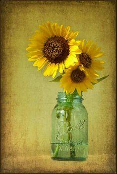Mason jar and sunflower Happy Flowers, Beautiful Flowers, Sun Flowers, Sunflowers And Daisies, Mellow Yellow, My Sunshine, Floral Arrangements, Sunflower Arrangements, Mason Jars