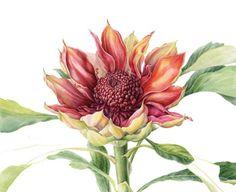 Botanical Drawings | Botanical Art Courses | Cavern Drakensberg Resort