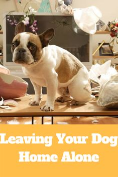 Leaving Your Dog Home Alone http://www.sellerdepo.com/sweetdogpalace/2016/12/15/leaving-dog-home-alone/