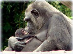 Sapucaia do Sul Brasil - Pesquisa Google   ----- Zoo _ RS