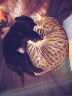 #Freya #Tom #Cats #Home #NewPet #Puppy #Dog #BlackDog #BlackGolden #GoldenRetriever #MyMonsters #CanaryIsland #LoveAnimals