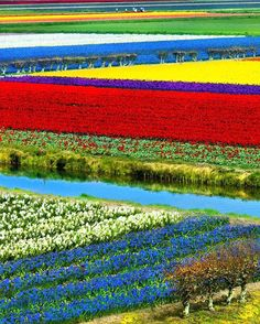 Keukenhof Netherlands  #fantasticearth   Photo Credit : @allapetropavlovska  by fantasticearth
