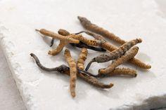 5 Benefits of Cordyceps: Chinese cordyceps fungus