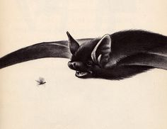 Bats | Flickr - from My vintage book collection