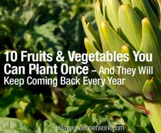 10 Fruits & Vegetables That Regrow Every Year...http://homestead-and-survival.com/10-fruits-vegetables-that-regrow-every-year/