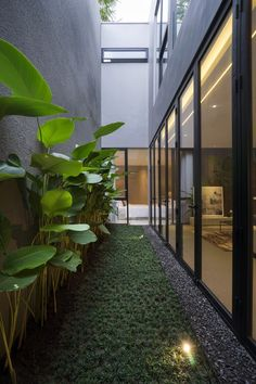 Image 47 of 79 from gallery of 'HHH' House / Simple Projects Architecture. Photograph by Mansyur Hasan Home Garden Design, Backyard Garden Design, Interior Garden, Home Design, Home And Garden, Design Hotel, Urban Design, Courtyard Design, Patio Design