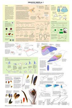 drawing birds pt.1, drawing, tutorial, diy, how-to, draw, birds