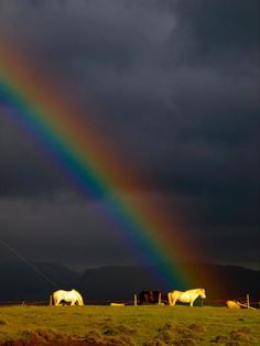 Iceland. Horses ARE the pot of gold at the end of the rainbow!