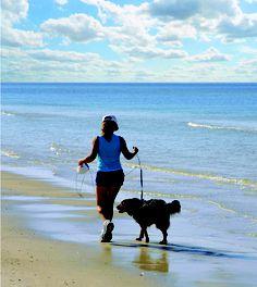 Pet Friendly beaches