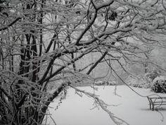 Gennaio 2013: la neve a ricoprire il vigneto.