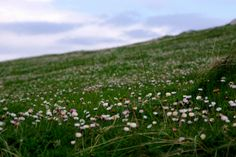Balranald RSPB reserve Outer Hebrides, Emeralds, Scotland, Mountains, Nature, Flowers, Plants, Pictures, Travel
