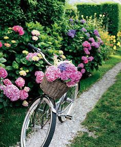Love this with all the Hydrangeas in several colors...then there is the bicycle loaded with cut flowers to carry somewhere!! Love this scene!!