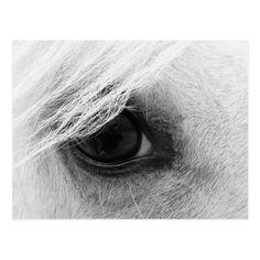 Horse Eye in Black and White Postcard