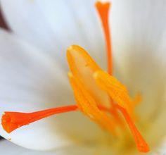 orange and white flower