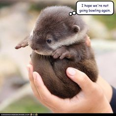 """The very awesome Stephen Fry shares a photo of a baby otter on Twitpic! """"Say hello to a baby otter on Twitpic"""" Baby Otters, Baby Sloth, Otters Cute, Baby Hippo, Cute Baby Animals, Animals And Pets, Funny Animals, Wild Animals, Exotic Animals"""