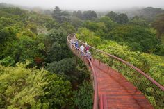 Cape Town: Celebrating the Kirstenbosch National Botanical Garden's centenary, is the unusual tree canopy walkway designed as a structural skeleton by Mark Thomas Architects. Photography by Adam Harrower. Mark Thomas, Da Nang, Places To Travel, Places To See, Parks, Vietnam, Changsha, Cape Town South Africa, Tree Canopy