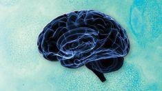 Тайны нашего мозга: 15 интересных фактов