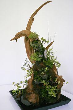 Air Plant Display, Plant Decor, Moss Garden, Garden Art, Air Plants, Indoor Plants, Ikebana, Moss Plant, Artificial Orchids