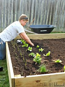 Call Her Blessed: Gunnar's Raised Bed Garden