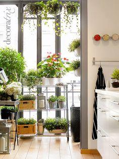 窓際にはブリキの鉢やステンレス棚を使えば、気軽にいろんな植物を並べることができます。移動するのもカンタン!