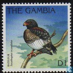 Gambia - Birds 1996