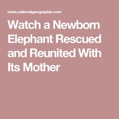 Watch a Newborn Elephant Rescued and Reunited With Its Mother