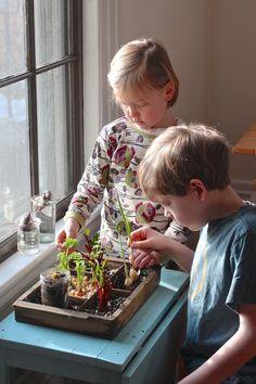 winter compost garden