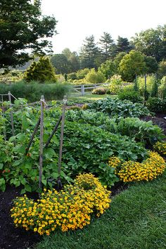 Add Curb Appeal for the Vegetable Garden: plant flowers at the ends of the rows!
