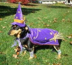 24 Things Your Dachshund Can Do For You | 24 Things Your Dachshund Can Do For You