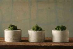 Delightful Lichen Jardinieres : Concrete Moss Trio