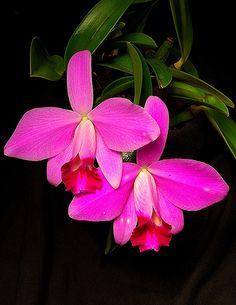 um encanto de flor