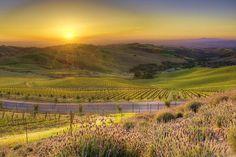 Beautiful sunset over colourful Daou vineyard.