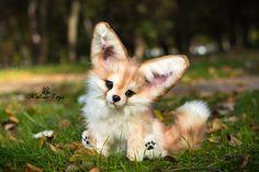 Handmade Poseable toy Fennec Fox by Malina toys on DeviantArt – Baak Turn Animals Zorro Fennec, Fennec Fox, Fox Pups, Cute Fantasy Creatures, Cute Fox, Ooak Dolls, Kawaii, Cute Baby Animals, Fluffy Animals
