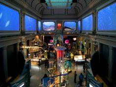 Smithsonian National Museum of Natural History, Washington D.C.