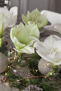 Succulents, Plants, Christmas, Xmas, Succulent Plants, Navidad, Plant, Noel, Natal