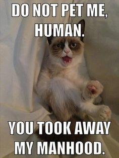 The Best Of Grumpy Cat – 70 Pics